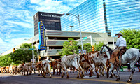 Cattle Drive 2014